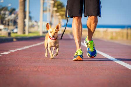 cane chihuahua: cane chihuahua chiudere insieme a proprietario camminare con il guinzaglio al di fuori del parco come amici Archivio Fotografico