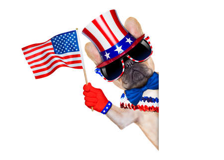 bulldog: bulldog franc�s agitando una bandera de EE.UU. el d�a de la independencia el 4 de julio, aislado en fondo blanco, al lado de la bandera en blanco blanca Foto de archivo