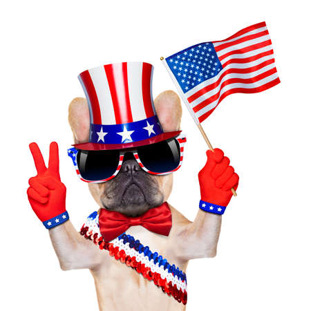 free vote: french bulldog waving a flag of usa on independence day on 4th  of july