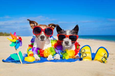 2 つの座っている犬のカップル一緒にビーチでタオルで終了夏の休暇の休日