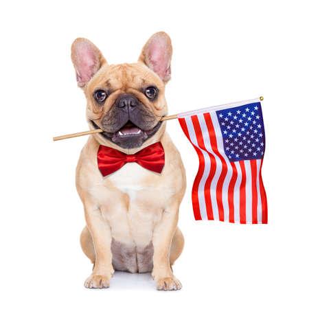 julio: bulldog francés con una bandera de EE.UU. el día de la independencia el 4 de julio Foto de archivo
