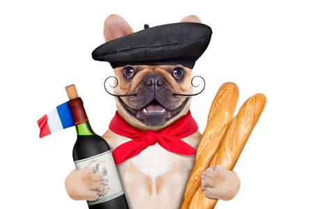 french bulldog with red wine and baguette and french  beret hat