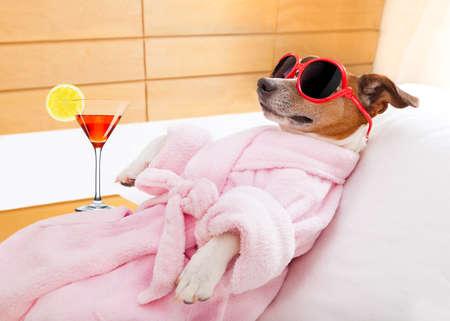 animali: jack russell cane rilassante e disteso, in un centro benessere termale, con indosso un accappatoio e occhiali da sole divertenti, martini cocktail inlcuded