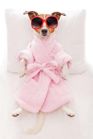 spas: Jack-Russell-Hund entspannt und liegend in Spa-Wellness-Zentrum, das einen Bademantel trägt und lustigen Sonnenbrillen