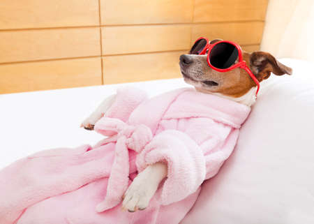 body grooming: jack russell dog relaxing  and lying, in   spa wellness center ,wearing a  bathrobe and funny sunglasses Stock Photo