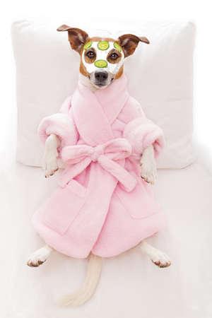 masaje facial: jack russell perro relax y la mentira, en el centro de bienestar spa, conseguir un tratamiento facial con máscara de crema hidratante y pepino Foto de archivo