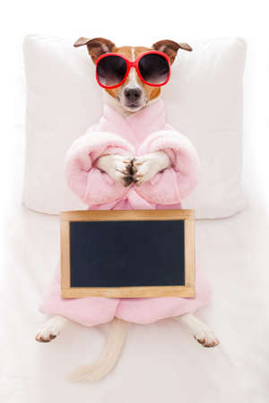 animals and pets: jack russell dog relaxing  with a prayer yoga pose with paws, in a spa wellness center, wearing a  bathrobe and sunglasses, holding an empty blank placard or blackboard Stock Photo