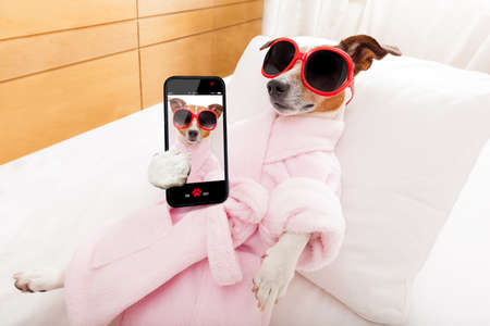 jack russell dog relaxing  and lying, in   spa wellness center ,wearing a  bathrobe and funny sunglasses, while making a selfie with smartphone Archivio Fotografico