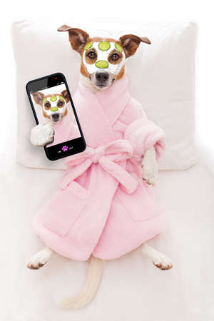 spa treatments: jack russell dog relaxing  and lying, in   spa wellness center ,getting a facial treatment with  moisturizing cream mask and cucumber, while taking a selfie with smartphone Stock Photo