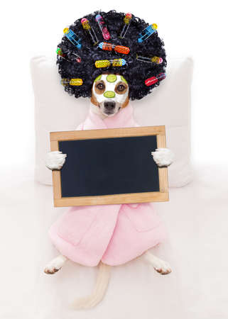 dream body: jack russell dog relaxing  and lying, in   spa wellness center ,getting a facial treatment with  moisturizing cream mask and cucumber holding a blank empty blackboard or placard