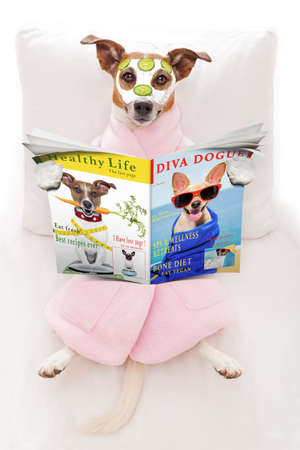 jack russell dog relaxing  and lying, in   spa wellness center ,getting a facial treatment with  moisturizing cream mask and cucumber, while  reading a magazine or newspaper