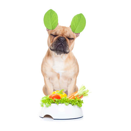 french bulldog  dog with a vegan vegetarian healthy  food bowl, isolated on white background