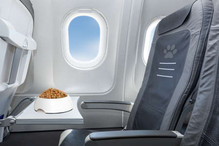 holiday pets: pet bowl full of food inside an airplane  window seat  where pets are welcome on board