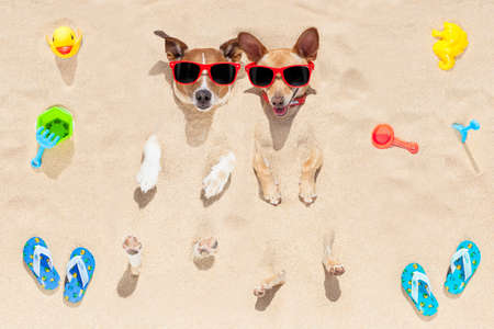 embed: couple of two dogs  buried in the sand at the beach on summer vacation holidays , having fun and enjoying ,wearing red sunglasses