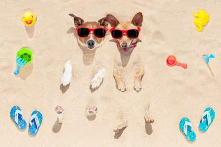 vacaciones en la playa: par de dos perros enterrados en la arena en la playa en las vacaciones de vacaciones de verano, divertirse y disfrutar, con gafas de sol rojas Foto de archivo