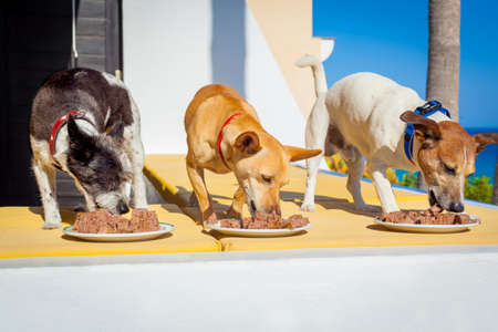 mat: ägare mata en rad av hundar med matskålar eller plattor, utanför och utomhus, alla på samma gång