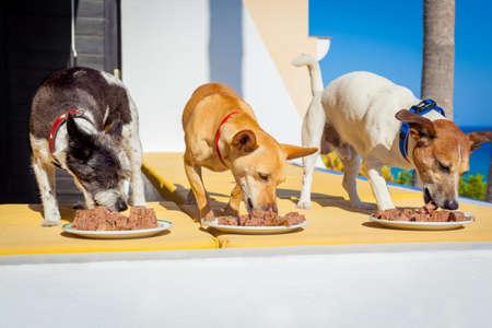 perro comiendo: propietario alimentar una fila de perros con recipientes de comida o placas, en las afueras y al aire libre, todo al mismo tiempo