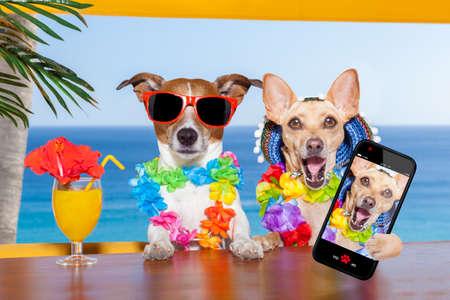 dos perros borrachos divertidos con un cóctel de verano, mientras se toma un selfie con un teléfono smartphone, en días festivos de vacaciones de verano Foto de archivo