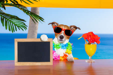 cocktails: jack russell dog  with a summer cocktail holding an empty blank blackboard or banner, on  vacation holidays Stock Photo