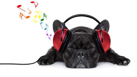 buldog: perro bulldog francés escuchando música con audífonos o auriculares, mientras se relaja o dormir en el suelo, aislado en fondo blanco