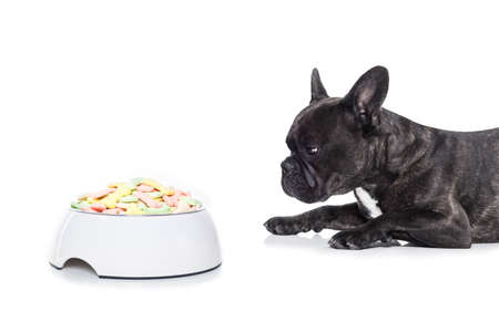 dog health: french bulldog  dog hungry and begging for a full food bowl of bone cookies,  isolated on white background