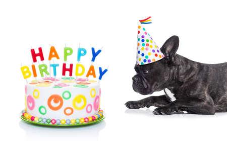 Buldog francuski pies głodny szczęśliwy tort urodzinowy ze świecami, ubrany kapelusz, na białym tle Zdjęcie Seryjne