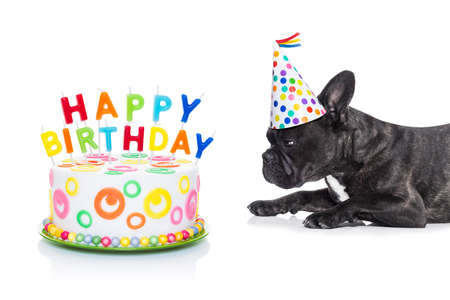 pastel cumpleaños: perro bulldog francés hambriento de una torta de cumpleaños feliz con velas, con sombrero de partido, aislado en fondo blanco