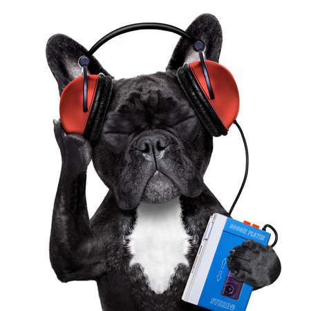 french: french bulldog dog  listening to oldies with headphones