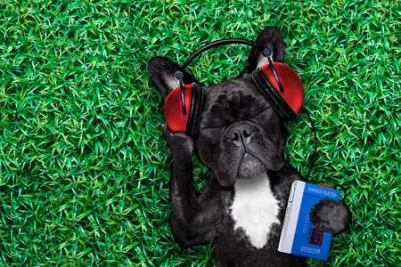 bulldog: perro bulldog francés escuchar oldies con auriculares