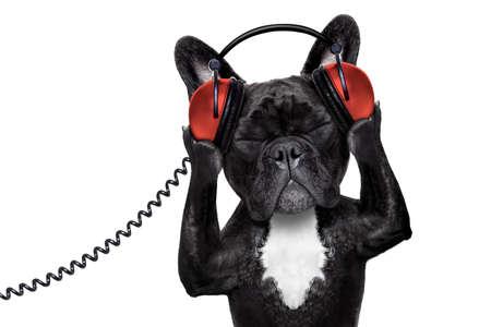 bouledogue français chien écouter oldies avec un casque