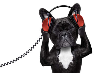 closed club: french bulldog dog  listening to oldies with headphones