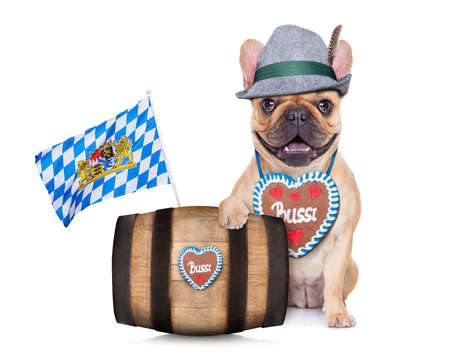 lederhose: bavarian german french bulldog  dog behind beer barrel and  bavarian flags Stock Photo