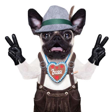 par�?s: tonto perro pug loco disfrazado de Baviera con pan de jengibre como cuello Foto de archivo