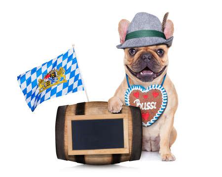 wiesn: bavarian german french bulldog  dog behind beer barrel and  bavarian flags Stock Photo
