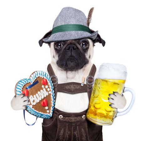 パグ犬首輪としてジンジャーブレッドとバイエルンに扮 写真素材 - 42736951