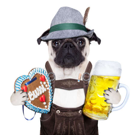 pug dog dressed up as bavarian with gingerbread as collar Imagens