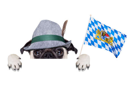 lederhose: pug dog dressed up as Bavarian Stock Photo