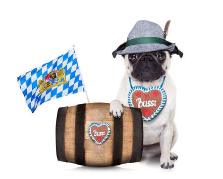 beerfest: bavarian german pug  dog behind beer barrel and  bavarian flags Stock Photo