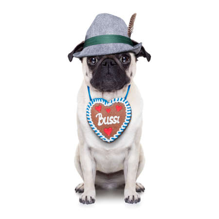 pug: pug dog dressed up as bavarian with gingerbread as collar Stock Photo