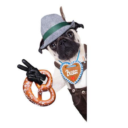 pug dog dressed up as bavarian