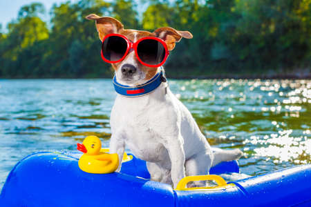 jack russell dog sitting on an inflatable  mattress in water by the  sea, river or lake in summer holiday vacation , rubber plastic toy included Archivio Fotografico