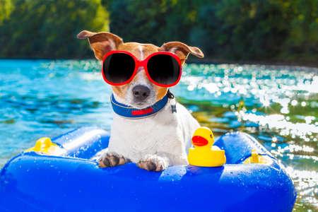 Jack Russell hund sitter på en uppblåsbar madrass i vatten vid havet