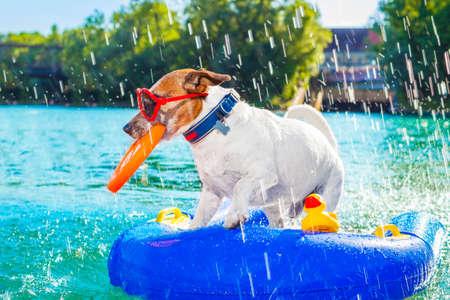 Jack Russell pes sedí na nafukovací matraci ve vodě u moře