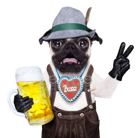 octoberfest: silly crazy  pug dog dressed up as bavarian with gingerbread as collar