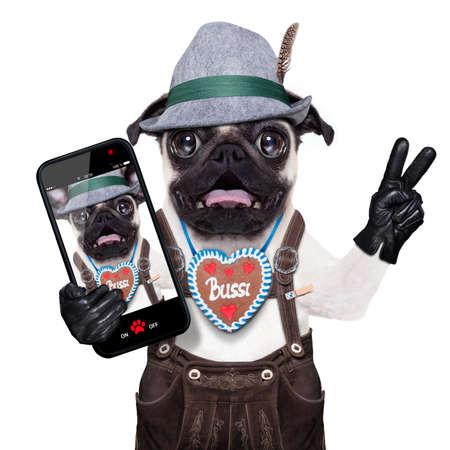 ? ?    ? ?  ? �crazy: tonto perro pug loco disfrazado de Baviera con pan de jengibre como cuello Foto de archivo