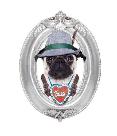 bavarian: pug dog dressed up as bavarian