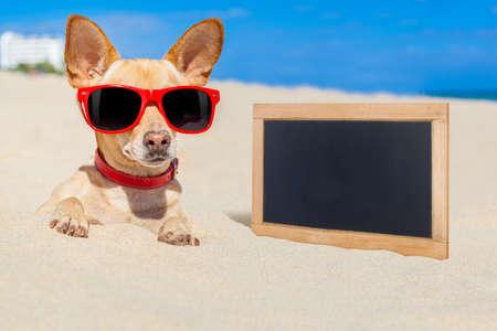 arena: perro chihuahua enterrado en un agujero en la arena en la playa en vacaciones de las vacaciones de verano, con gafas de sol de color rojo, orilla del mar detrás, la bandera en blanco vacío a un lado