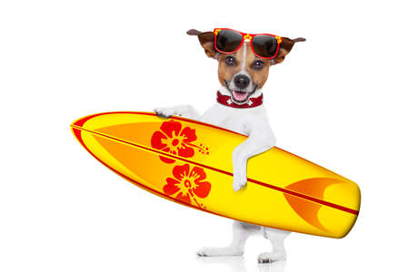 silly funny cool  surfer dog holding  fancy surf board , isolated on white background Stock Photo