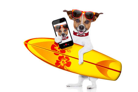 funny people: silly funny cool  surfer dog holding  fancy surf board taking a selfie, isolated on white background