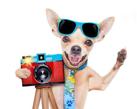 クールな観光写真家犬のスナップショットや、レトロな古いカメラへのジェスチャー チーズを言うと写真撮影